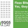 fleas bite chart - 400 x a day stat